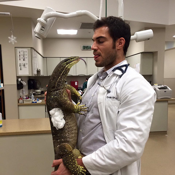 Не судите, у них любовь ветеринары, животные