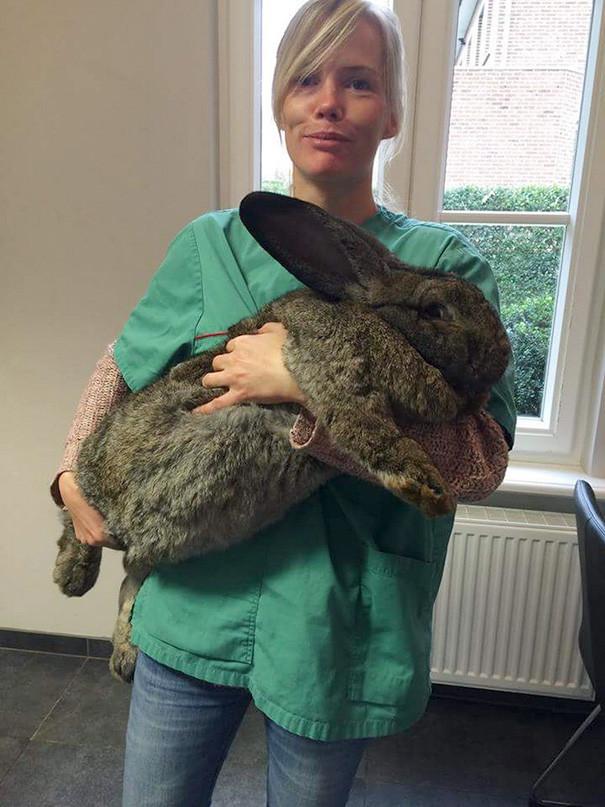 Малыш-кролик ветеринары, животные
