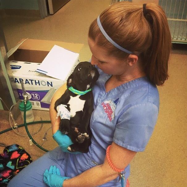 Еще один благодарный пациент ветеринары, животные
