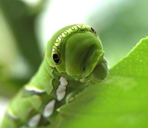25 очаровательных животных, которые сделают ваш день животные, милота
