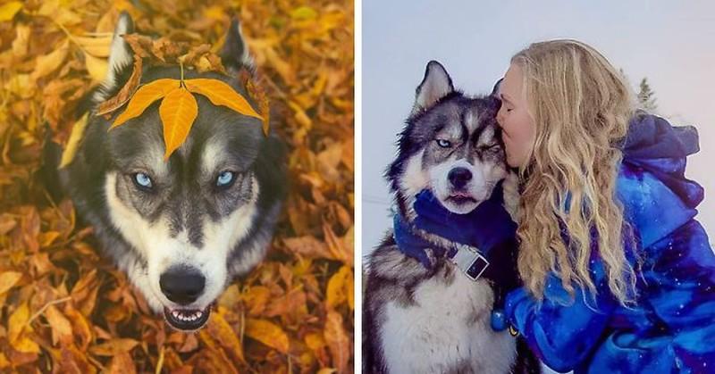 Сказочная история собаки и девушки, которые спасли друг друга дружба, животные, история, фотография