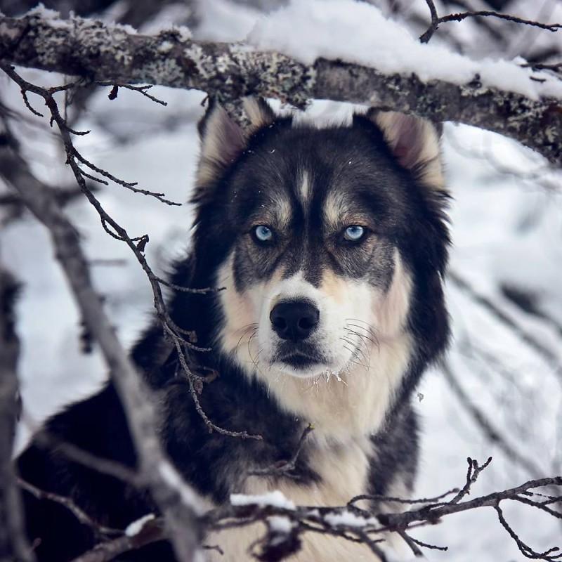 Его голубые глаза стали для меня мотивацией найти счастье, и я просто не могла больше ее игнорировать дружба, животные, история, фотография