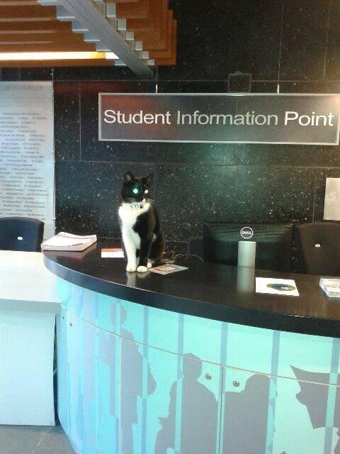 10. Здравствуйте, я кот. Чем могу помочь? животные, коты