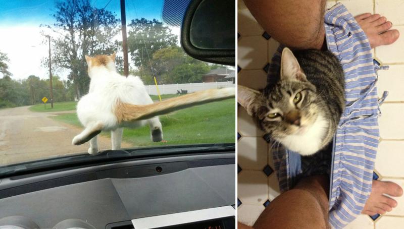 24 доказательства того, что кот всегда найдет себе место животные, коты