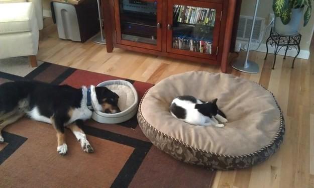 24. Резюмируя: весь мир кошачья постель за исключением самой кошачьей постели животные, коты