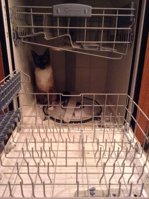 16. Для мытья посуды? Не, не слышал животные, коты