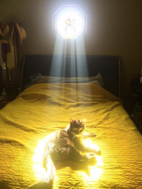 18. Божественный свет? Он для того, чтобы сидеть в нем животные, коты