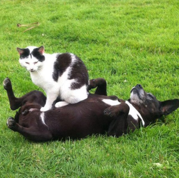 13. Каждый уважающий себя кот знает, что собаки – это портативные подушки для котиков животные, коты