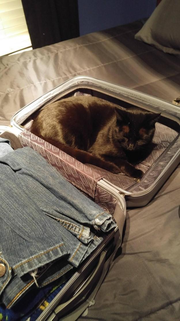 3. Собранный чемодан? Места лучше не найти! животные, коты