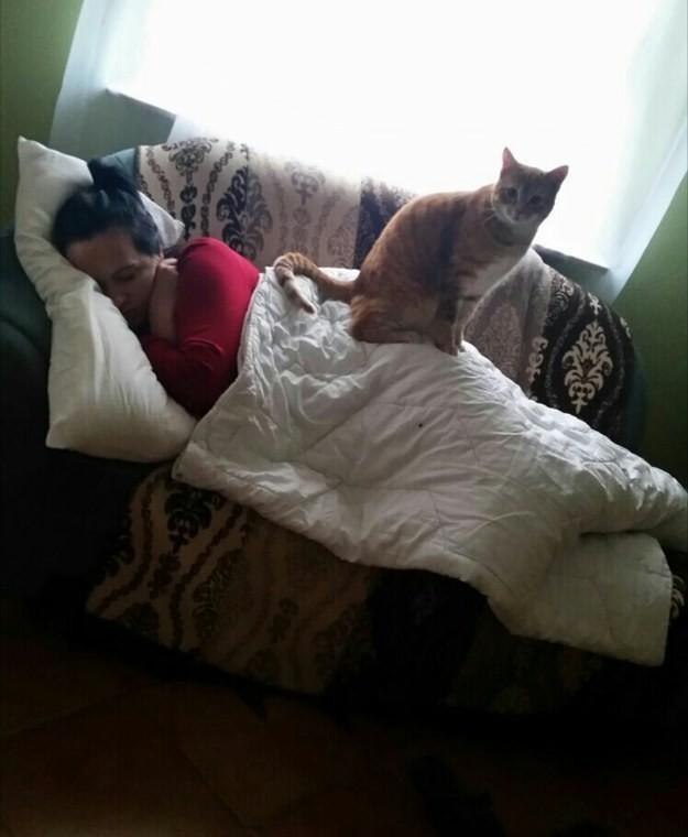 6. Как и спящие людишки животные, коты