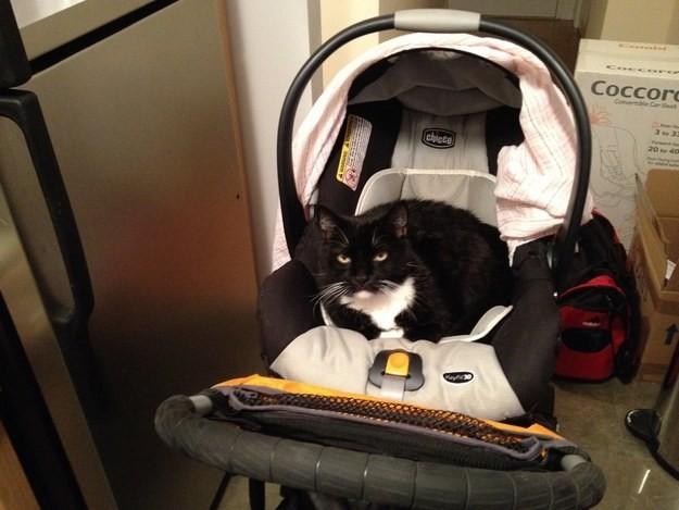 9. Детские коляски, само собой, на самом деле предназначены для котов животные, коты