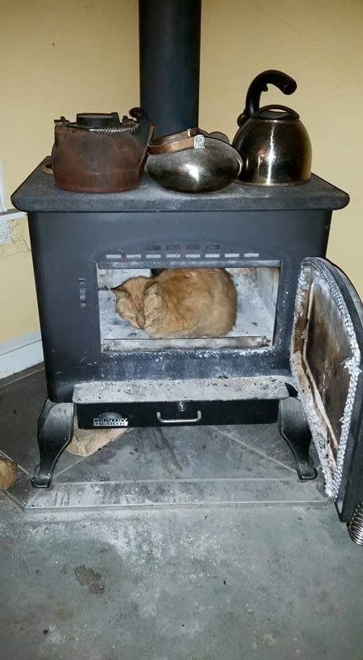 12. Вздремнуть в еще теплой печи одно удовольствие животные, коты
