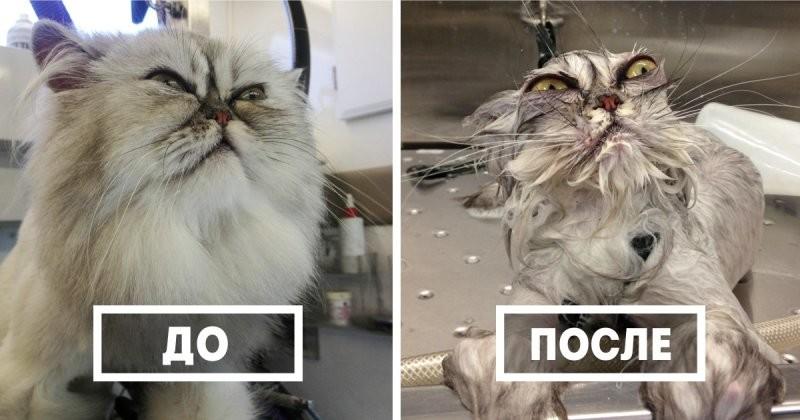 50 забавных животных до и после водных процедур  вода, животное, после
