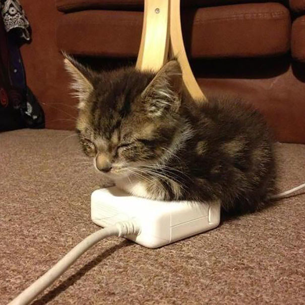 23. Спит и греется  животные, кошка, сон