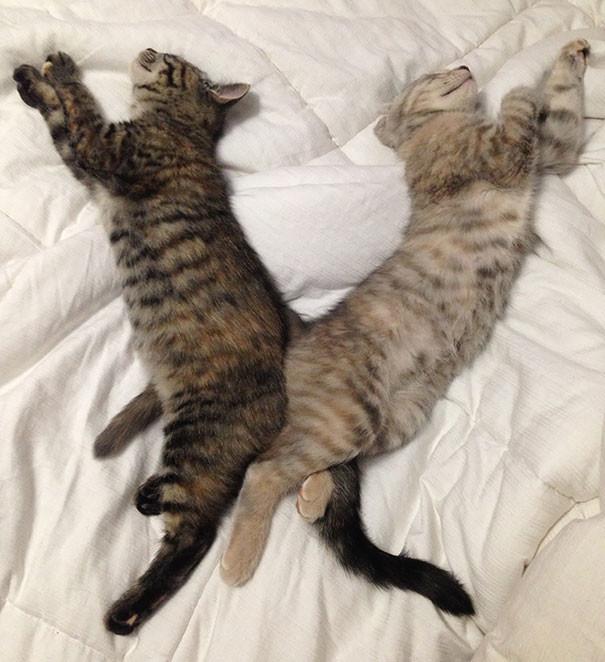 51. Синхронно  животные, кошка, сон