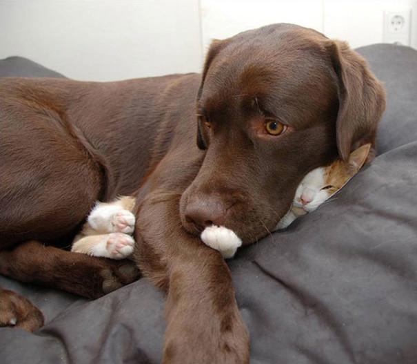 21. Кошка? Не видел! животные, кошка, сон