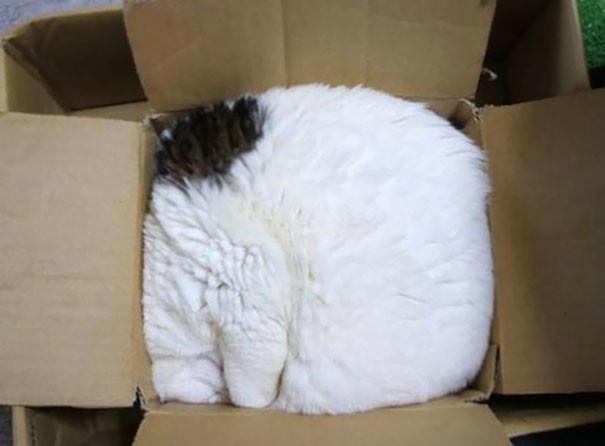 6. Кошка.rar животные, кошка, сон