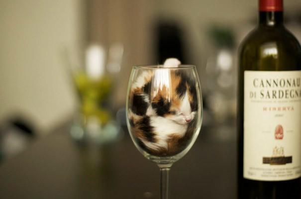 3. Спасибо...больше вина не надо животные, кошка, сон