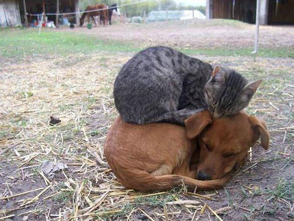5. Настоящие друзья животные, кошка, сон