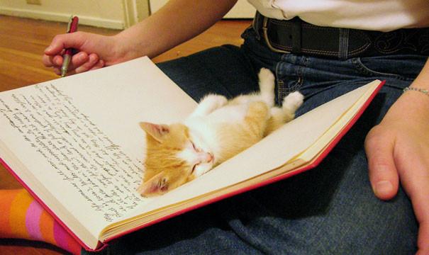 40. И даже в книге животные, кошка, сон