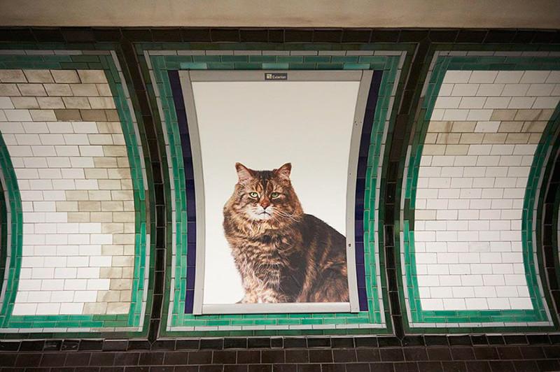 Жители Лондона выкупили все рекламные объявления на станции метро и заменили их на котиков англия, коты, метро, милота