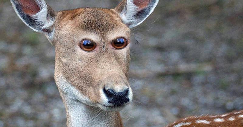 Олененок  глаза, животные, фотошоп