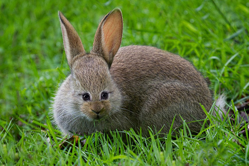 Кролик  глаза, животные, фотошоп