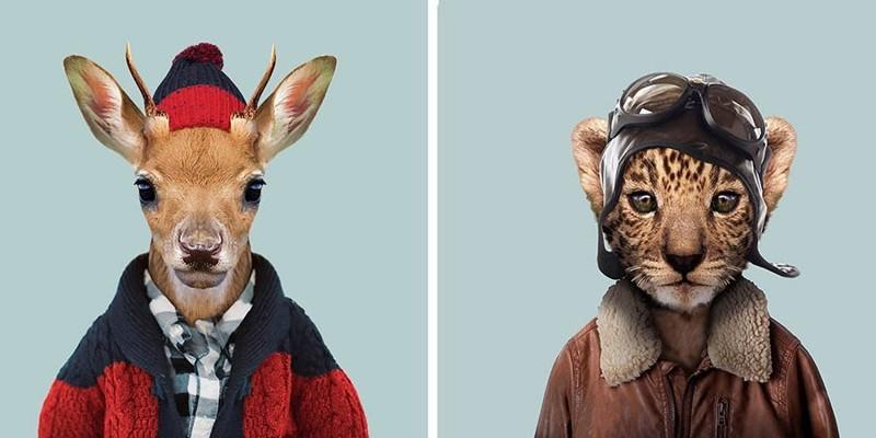 Этот художник одевает животных в человеческую одежду животные, одежда, художник