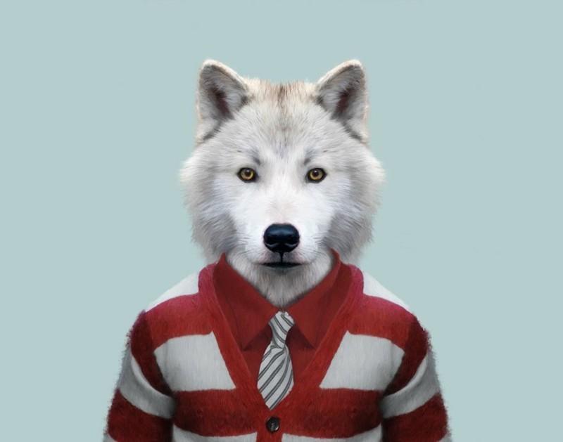 Полярный волк   животные, одежда, художник