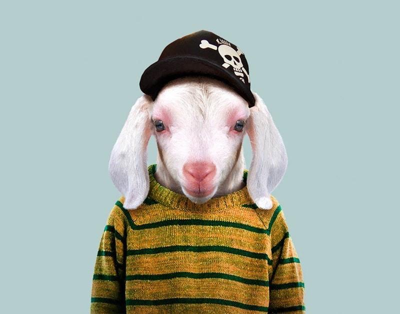 Домашняя коза (ребенок)    животные, одежда, художник
