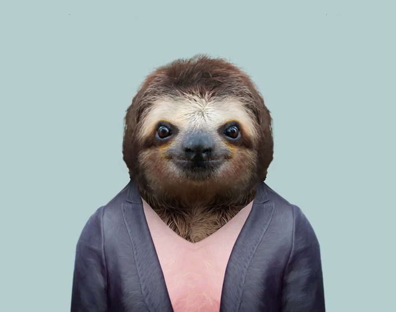Бурогорлый ленивец   животные, одежда, художник