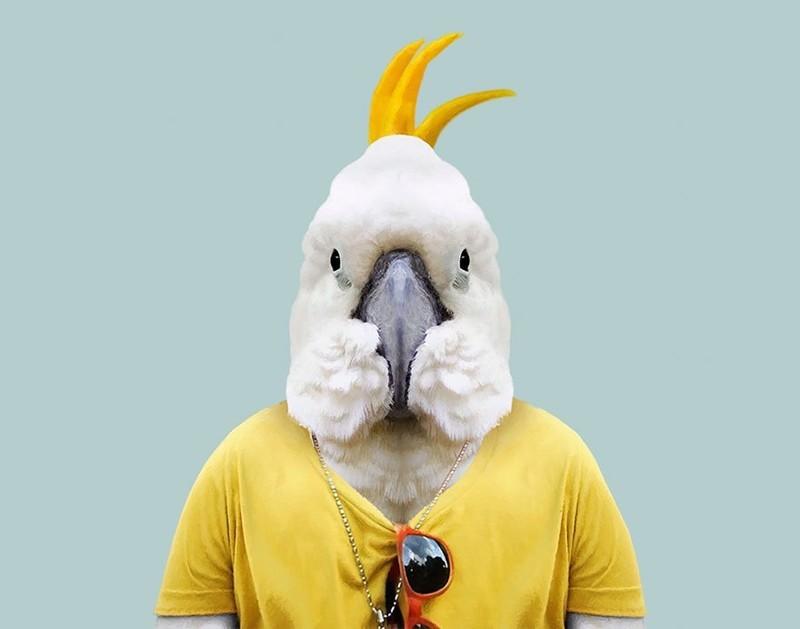 Большой желтохохлый какаду   животные, одежда, художник