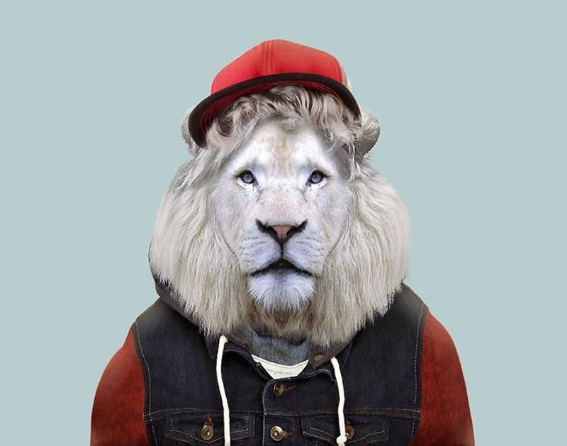 Белый трансваальский лев    животные, одежда, художник
