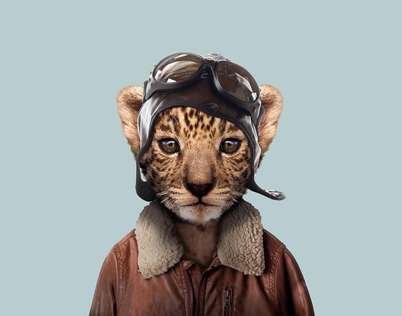 Леопард (детеныш)   животные, одежда, художник