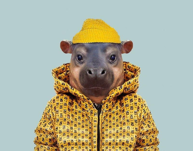 Карликовый бегемот (теленок)    животные, одежда, художник