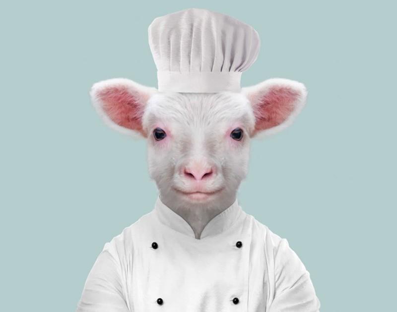 Овца (агнец)    животные, одежда, художник