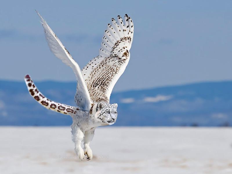 Снежный совапард  животные, фотошоп, юмор.