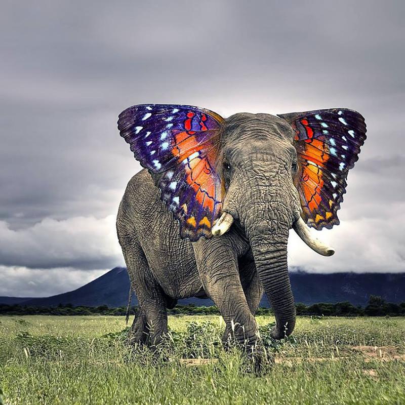 Бабочлон  животные, фотошоп, юмор.