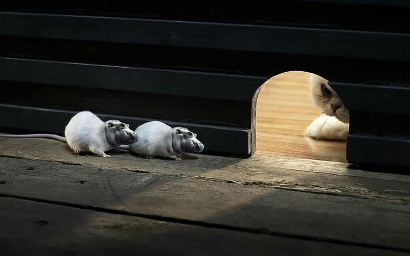 Бегемыши  животные, фотошоп, юмор.