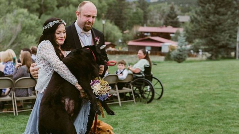 Умирающий пес из последних сил противостоял болезни, чтобы увидеть свадьбу своей хозяйки болезнь, животные, пес, свадьба