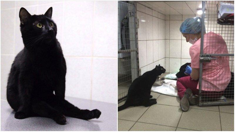 Этот кот не может ходить, но помогает другим больным животным добро, клиника клык, кот люцик, котики, черный кот
