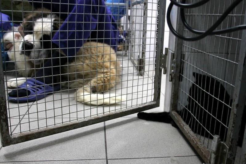 Иногда вместо работы так охота поиграть! добро, клиника клык, кот люцик, котики, черный кот