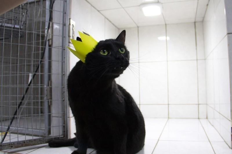 Теперь обо мне пишут даже заграничные газеты —вот как бывает! добро, клиника клык, кот люцик, котики, черный кот