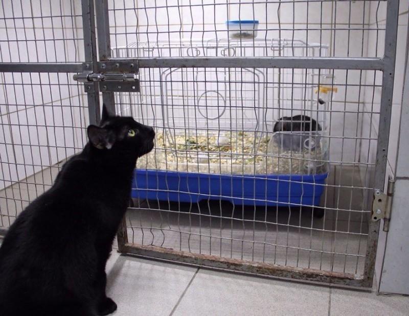 Наш инстаграм вы легко найдете добро, клиника клык, кот люцик, котики, черный кот