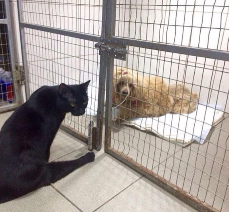 Я хорошо понимаю этих бедняжек, я — такой же как они. добро, клиника клык, кот люцик, котики, черный кот
