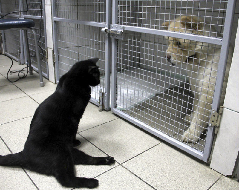 Нам всегда есть о чем поговорить. добро, клиника клык, кот люцик, котики, черный кот