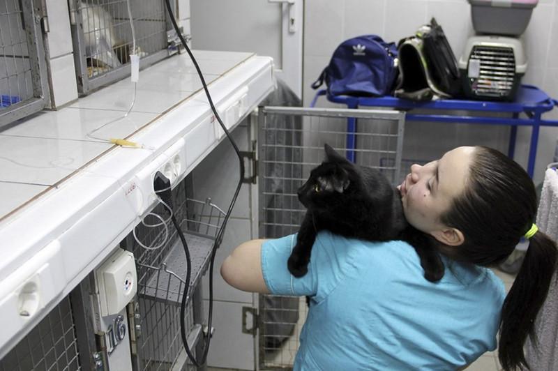 Иногда я работаю донором, и спас немало кошачьих жизней. добро, клиника клык, кот люцик, котики, черный кот