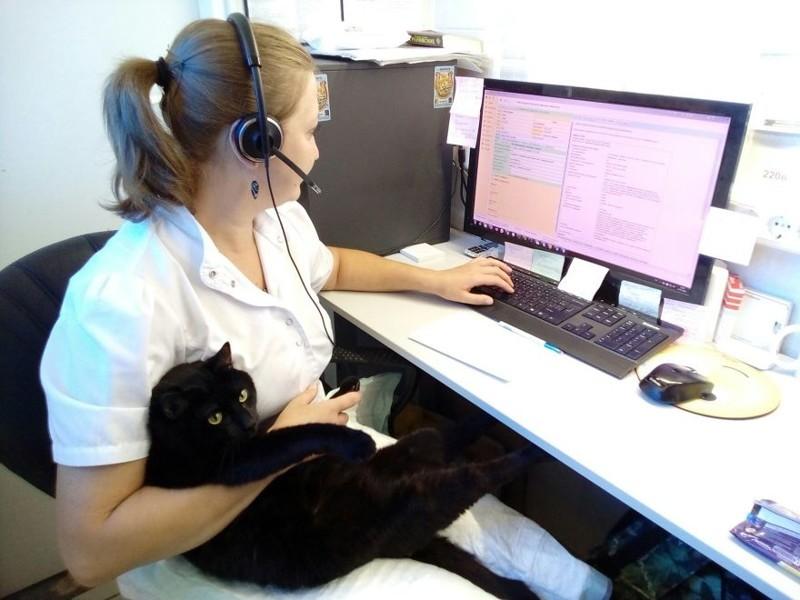 Наши врачи — самые лучшие! добро, клиника клык, кот люцик, котики, черный кот