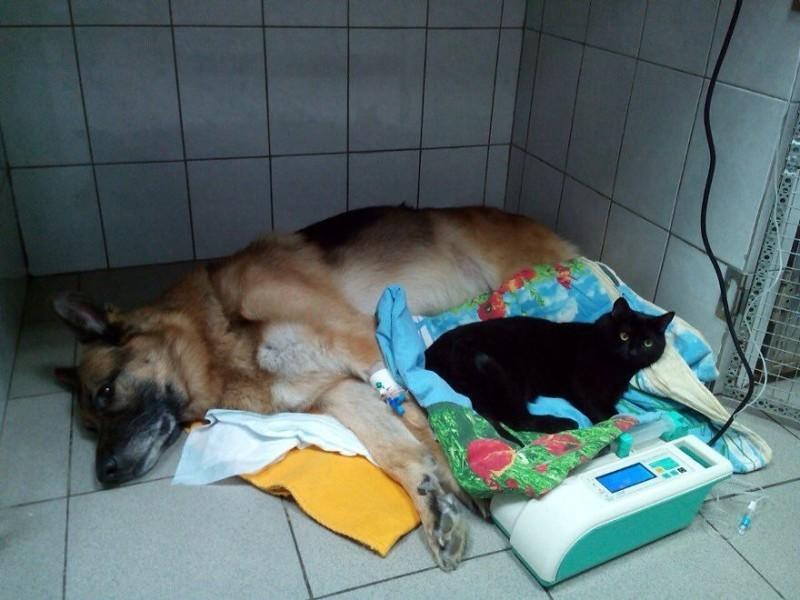 Всегда их согреваю и баюкаю - после операции нужна забота. добро, клиника клык, кот люцик, котики, черный кот