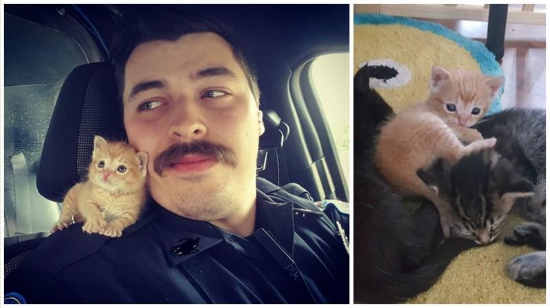 Полицейский приютил котенка и теперь они сражаются с преступностью вместе доброта спасет мир, котята, спасение животного